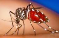 Des cas de chikungunya diagnostiqués puis guéris à Kédougou (ministère)