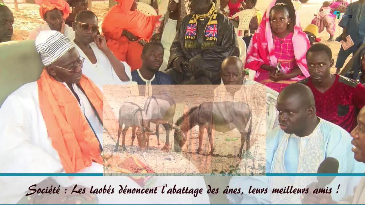Société : Les laobés dénoncent l'abattage des ânes, leurs meilleurs amis !