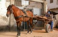 Le cheval un bien économiquement rentable mais très négligé par son propriétaire